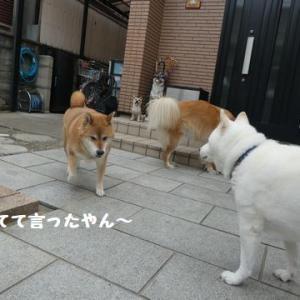 ひなたちゃんに、叱られた~ ☆ カリカリの楽しみ方!