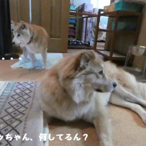 ひなた体操やで! ☆ 大和くんの受難~