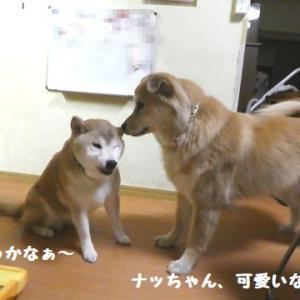 仲良しな女子チーム! ☆ コテツとタオ、付かず離れず仲良しさん~