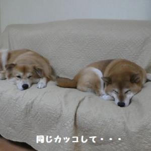 同じカッコで並んで、可愛すぎ~! ☆ 朝練、頑張ってるねん!