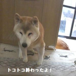トコトコナッちゃん、ウ~ン・・・眠い! ☆ ひなたちゃん、ランちゃんに会いたかったね~