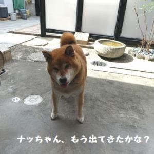 もれなくやって来る、仲裁犬! ☆ 仲良しお庭遊び、特別参加が居るよ~