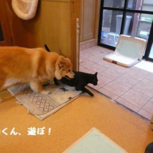 ひなたちゃん、荒ぶる!(但し、物にだけ) ☆ 風ちゃんの拘りの食べ方~