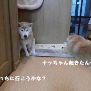 やっぱり気になる~ ☆ ひなたちゃん、ハッチャケたら凄いよ!