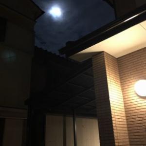 囲まれて幸せなシニアちゃん! ☆ 何度撮っても、夜空は苦手~