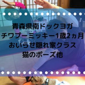 青森県南ドックヨガ・チワプーミッキー1歳2ヵ月8回目の参加おいらせ隠れ家クラス難しかった猫のポーズ