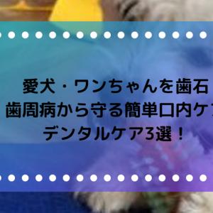 愛犬・ワンちゃんを歯石・歯周病から守る簡単口内ケア・デンタルケア3選!