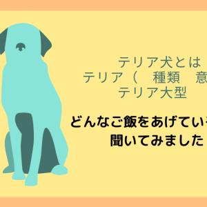 テリア犬 テリア 種類 意味 テリア大型 人気のドックフード
