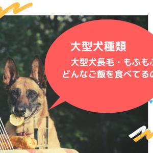 大型犬種類と大型犬の寿命 大型犬長毛 大型犬もふもふした犬種