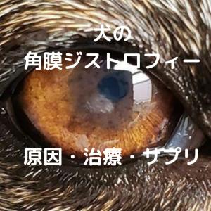角膜ジストロフィー 犬
