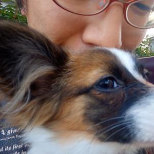 幼犬ポアロ、初めての一人お出かけに挑戦してみた!