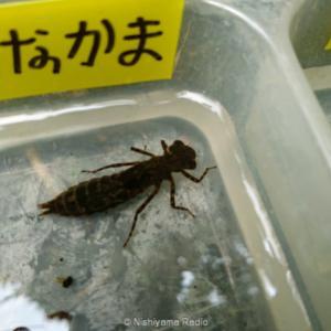 横浜自然観察の森で「水辺のいきもの調査隊」のお手伝いをしてきた。