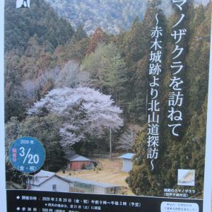尾鷲市・熊野古道センター事業「新しい古道の歩き方 クマノザクラを訪ねて」ご案内