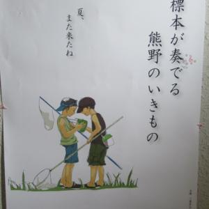 尾鷲市・熊野古道センターで企画展「標本が奏でる熊野のいきもの」ご案内