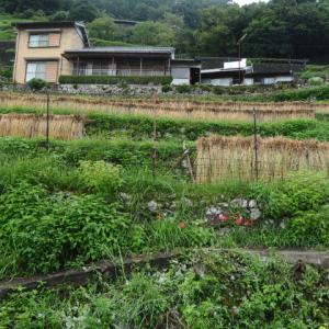 熊野市紀和町「丸山千枚田」
