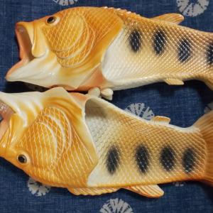 魚サンと今回のメダ活‼️