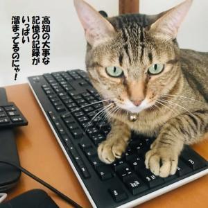 ポンコツお母さんリタイヤ!これからブログは猫が書くんだって!