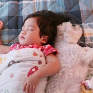 子供が昼寝からなかなか起きない…これって起こす?起こさない?