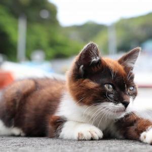 東北離島の猫たち 2019年7月 その35
