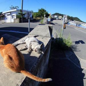 瀬戸内E島の猫たち 2019年9月 その2