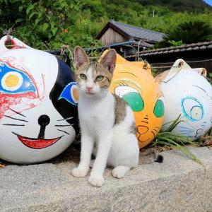 瀬戸内B島の猫たち 2019年9月 その7