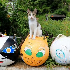 瀬戸内B島の猫たち 2019年9月 その8