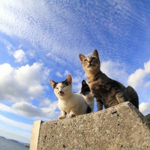 瀬戸内B島の猫たち 2019年9月 その51