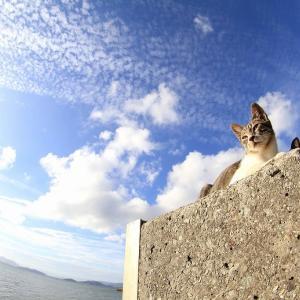 瀬戸内B島の猫たち 2019年9月 その52