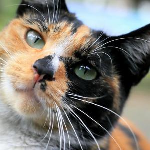 沖縄の猫たち 2019年10月 その19
