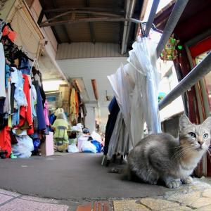 沖縄の猫たち 2019年10月 その22