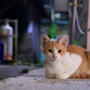 沖縄の猫たち 2019年10月 その23