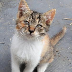 九州F島の猫たち 2019年11月 その6
