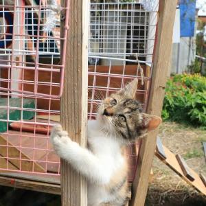 九州F島の猫たち 2019年11月 その7