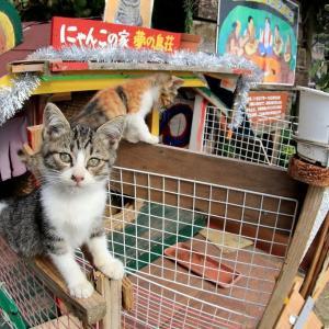 九州F島の猫たち 2019年11月 その8