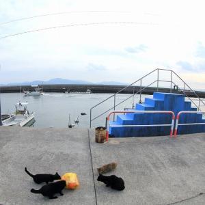 九州F島の猫たち 2019年11月 その12