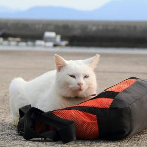 九州F島の猫たち 2019年11月 その13