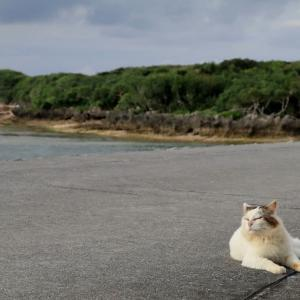 沖縄の猫たち 2019年12月 その35