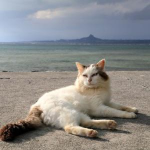 沖縄の猫たち 2019年12月 その36