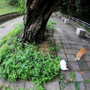 沖縄の猫たち 2019年12月 その38