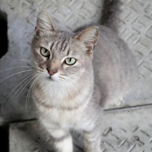 沖縄の猫たち 2019年12月 その39