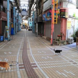 沖縄の猫たち 2019年12月 その40
