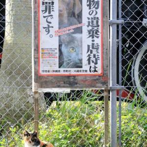 沖縄の猫たち 2019年12月 その41