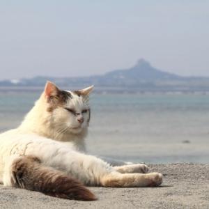 沖縄の猫たち 2020年1月 その3