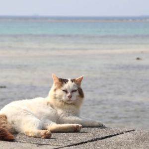 沖縄の猫たち 2020年1月 その4