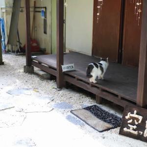 沖縄の猫たち 2020年1月 その6