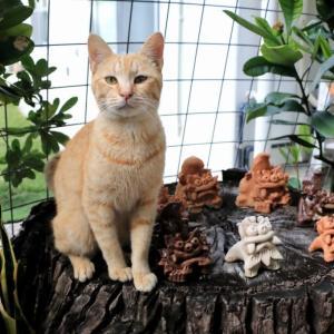沖縄の猫たち 2020年1月 その7