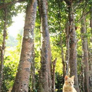 沖縄の猫たち 2020年1月 その8