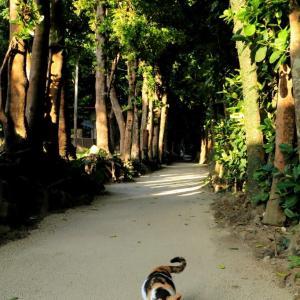 沖縄の猫たち 2020年1月 その9