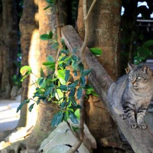 沖縄の猫たち 2020年1月 その10