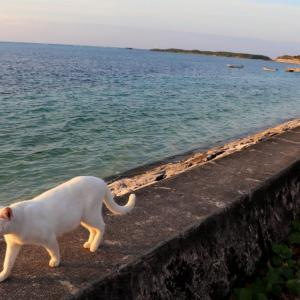 沖縄の猫たち 2020年1月 その11